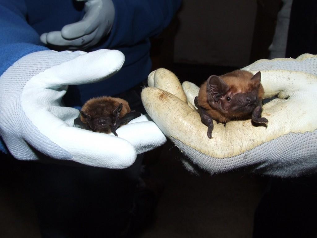 20131026 JM Bats