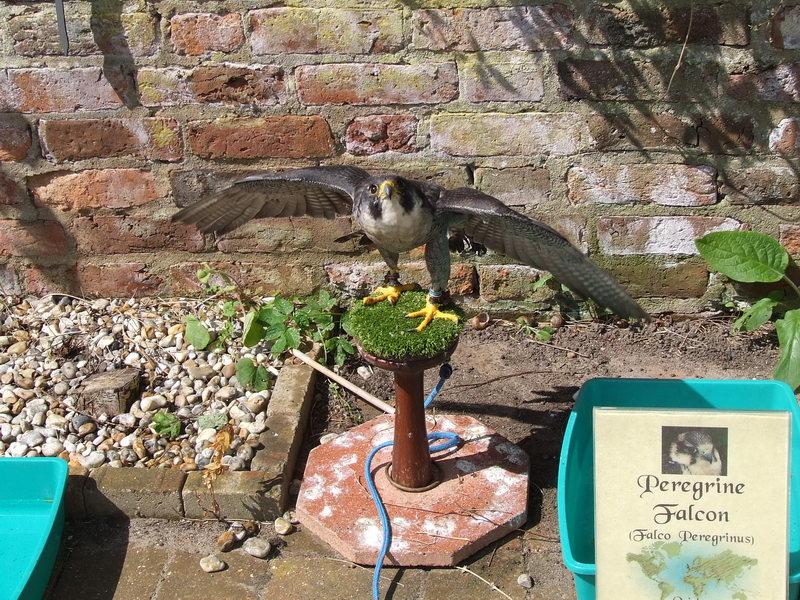 20140215 JM Museum Peregrine Falcon Image