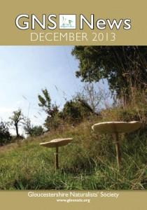 GNS News December13