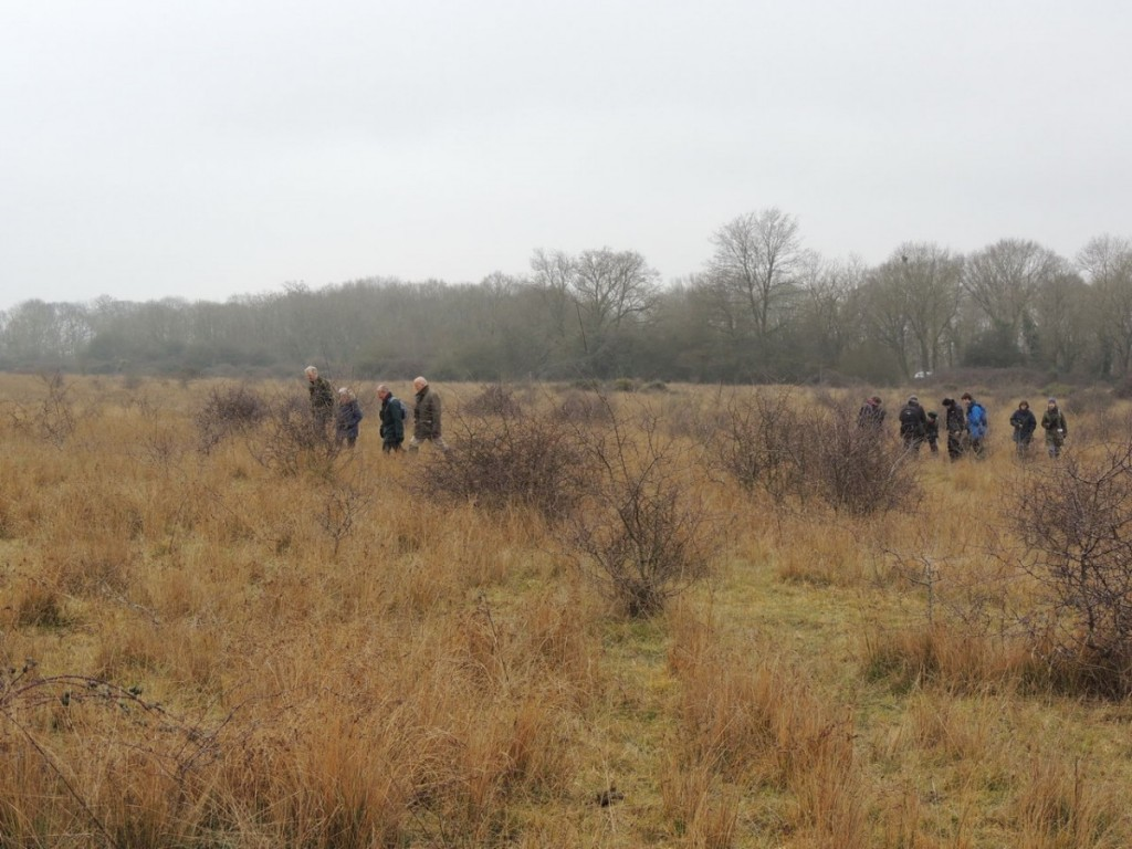 Brockeridge Common 4GNS 15thFeb2015
