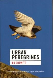 Urban Peregrines001