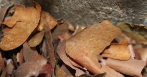Bark nest material