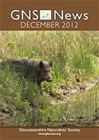 GNS News 201212