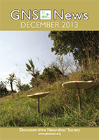 GNS News 201312