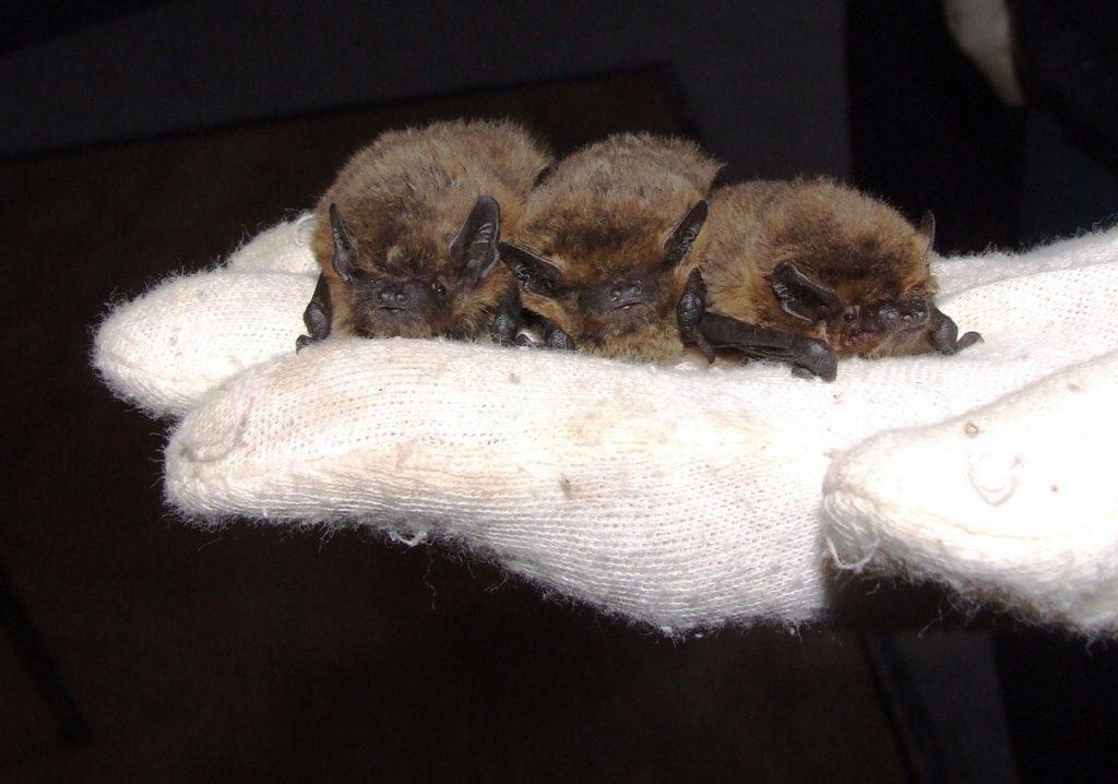 20161022-john-moore-museum-discovering-bats-image